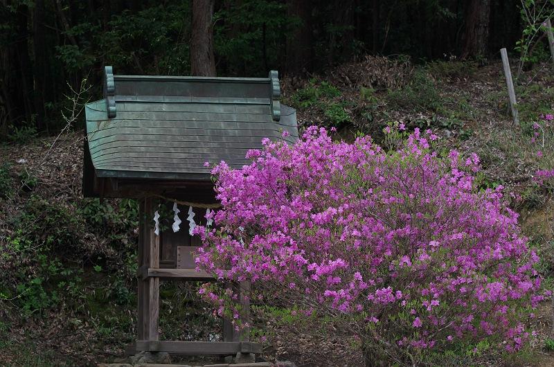 石楠花とツツジと枝垂れ桜が咲く小径