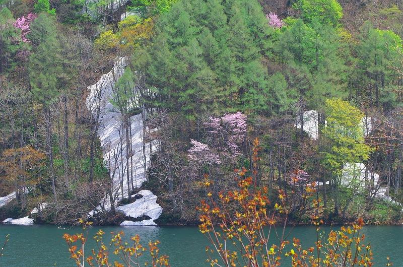 桜と残雪と新緑と