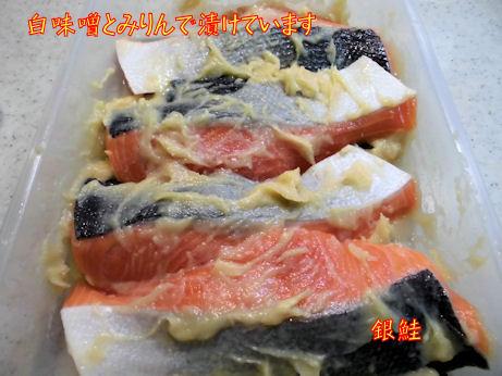 銀鮭の味噌漬け