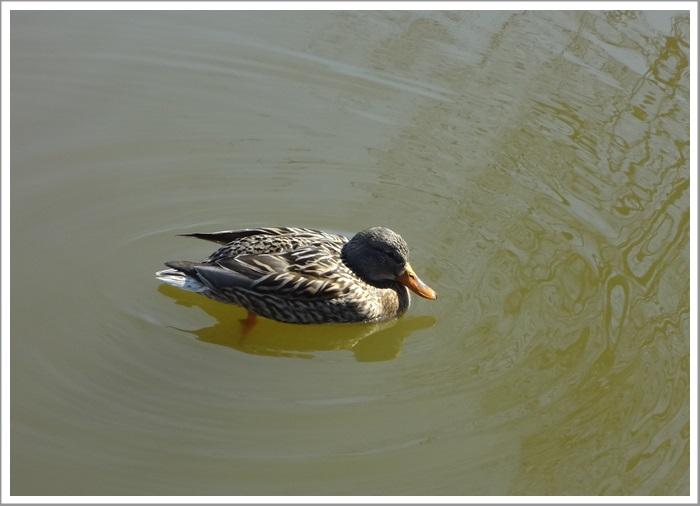 遊亀公園散策DSC05360