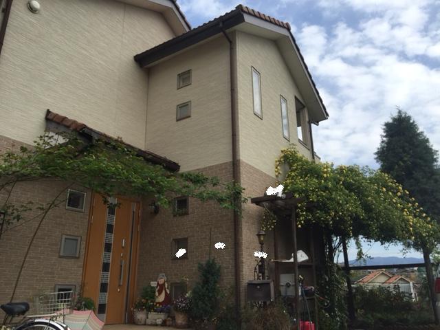 玄関側の黄モッコウバラとアズビス