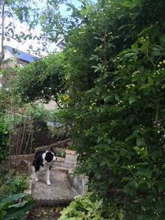 お庭お散歩中の愛犬ラン