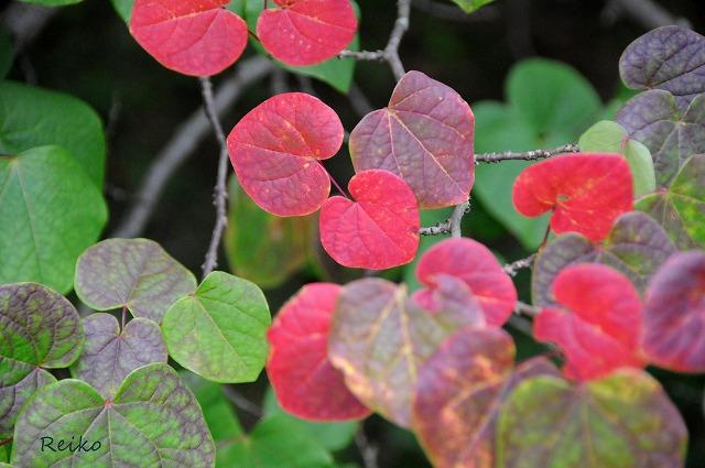 20158神戸植物園