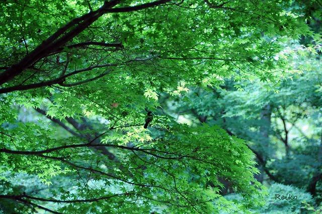 20158神戸植物園とり