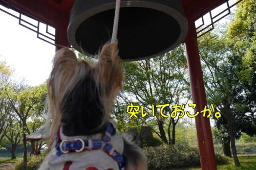 YFvDHr5_pOq1PTx1430046912_1430046974.jpg