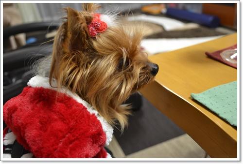 メリークリスマスDSC_1017-20141224