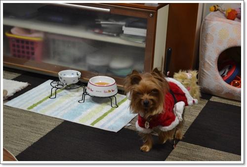 メリークリスマスDSC_1020-20141224