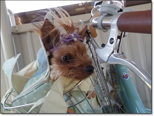 自転車に乗ってIMGP2036-20150120