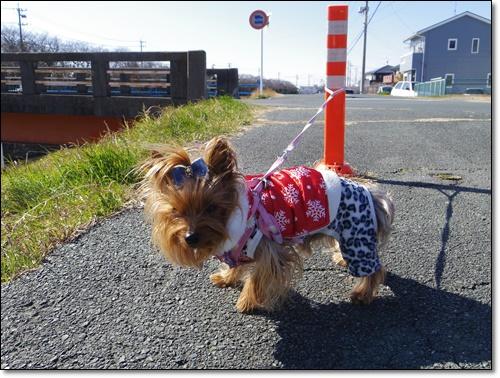 お散歩IMGP2181-20150203