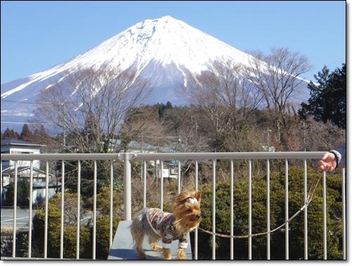 富士山IMGP2201-20150211