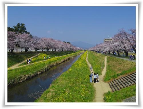 3月31日の桜IMGP2493-20150331