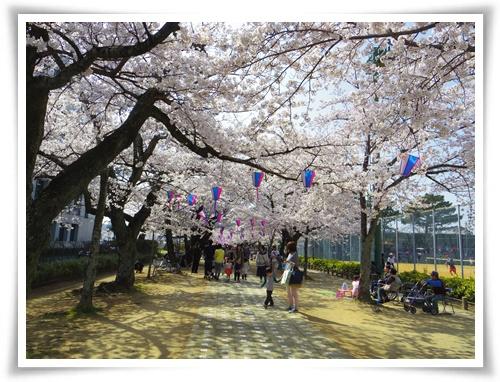 3月31日の桜IMGP2498-20150331