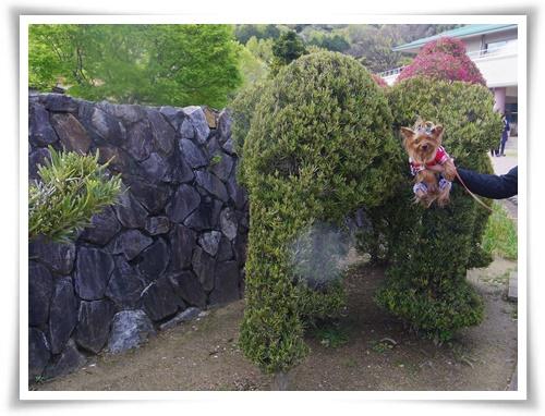 ツツジと赤塚IMGP2549-20150411-145653