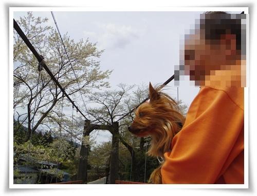 薄墨桜を見にIMGP2566-20150412-130048