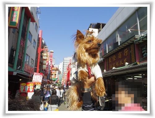 オフ会 神戸IMGP2639-20150418