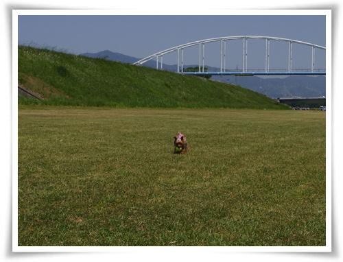 河川敷IMGP2859-20150510