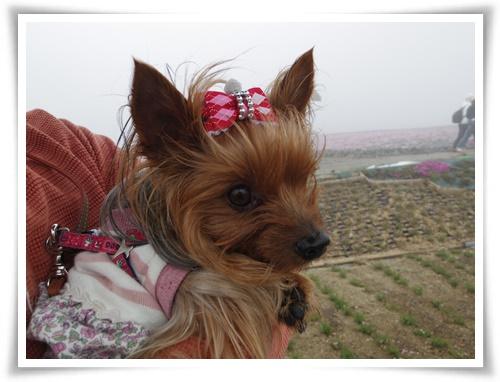 茶臼山高原IMGP2875-20150516
