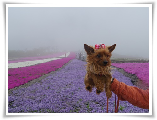 茶臼山高原IMGP2879-20150516
