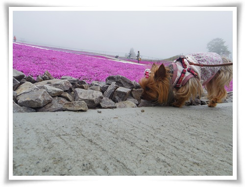 茶臼山高原IMGP2882-20150516