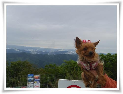 茶臼山高原IMGP2887-20150516