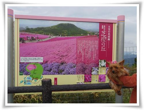 茶臼山高原IMGP2892-20150516