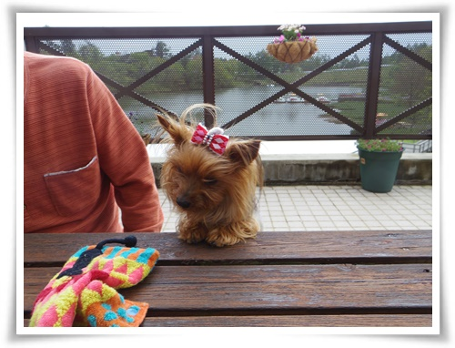茶臼山高原IMGP2896-20150516