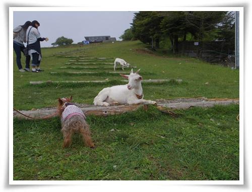 茶臼山高原IMGP2898-20150516