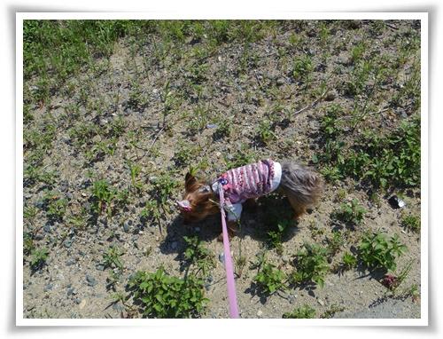 散歩IMGP2970-20150526