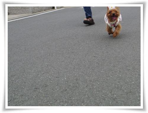 お父さんと一緒のお散歩IMGP3129-20150620