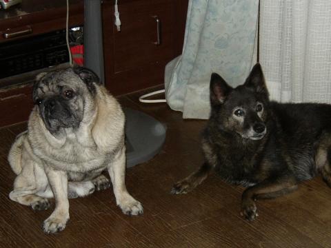 2007年10月7日マクとリッピー