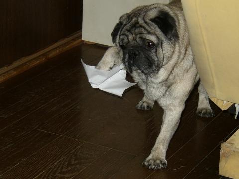 2007年10月7日リッピー6歳4ヶ月