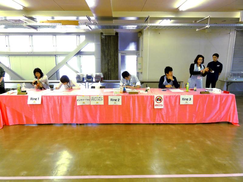 スプリングフェレットショー2015(タイトルクラス審査)