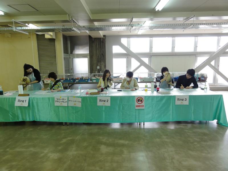 スプリングフェレットショー2015(タイトルクラス審査)2