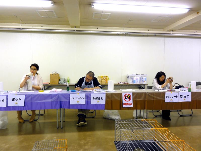 スプリングフェレットショー2015(スペシャリティ審査)2
