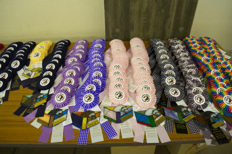 スプリングフェレットショー2015(ロゼッタ)2