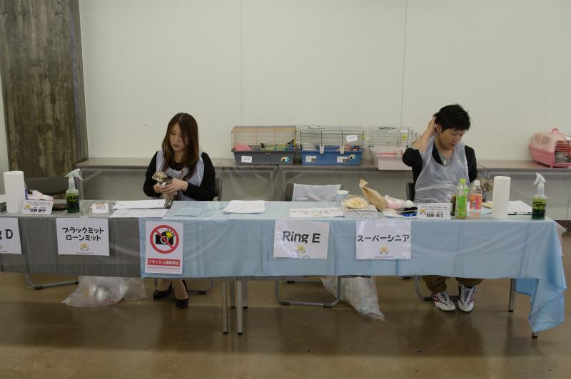 スプリングフェレットショー2015(スペシャリティ審査)
