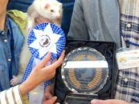 スプリングフェレットショー2015(タイトル表彰)8