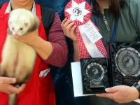 スプリングフェレットショー2015(タイトル表彰)15