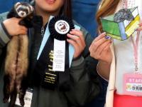 スプリングフェレットショー2015(カラー表彰)9