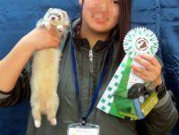 スプリングフェレットショー2015(スペシャリティ表彰)2