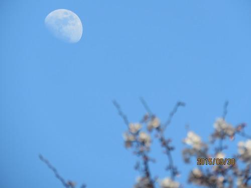 お月さん4