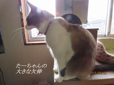 IMG_1270あ
