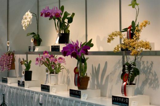 s-650-5受賞花