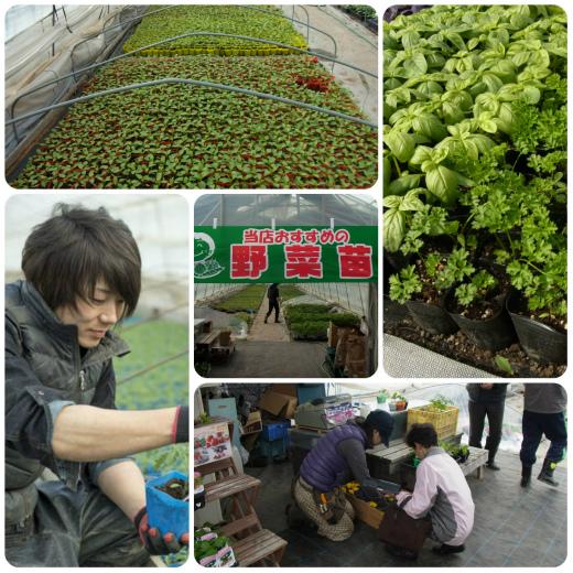 s-652-2野菜苗