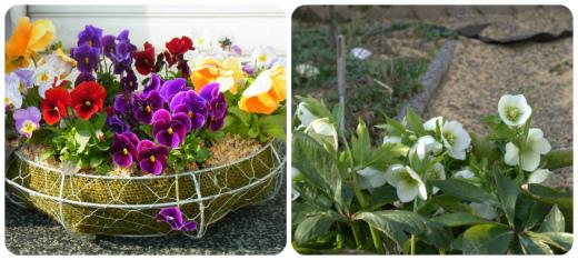 s-654-5庭の開花