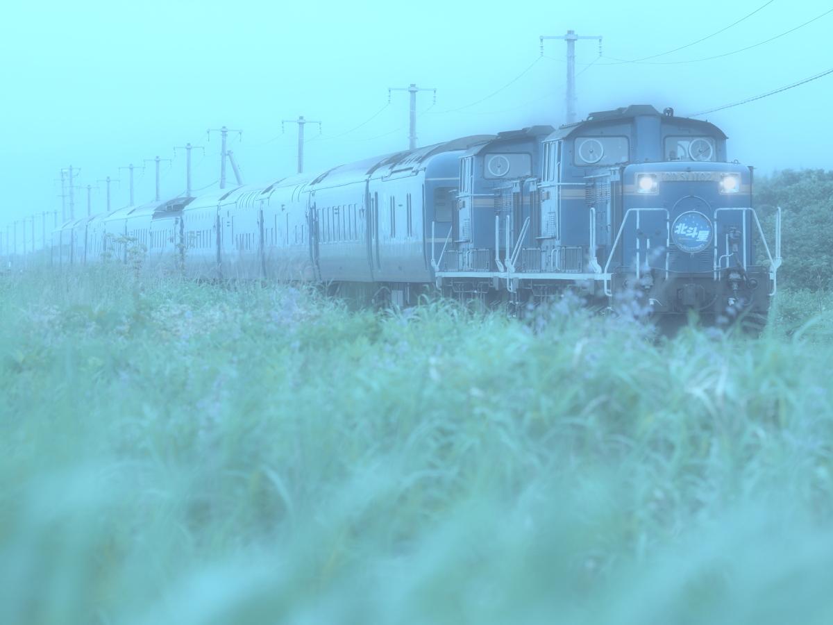 P8080593a.jpg