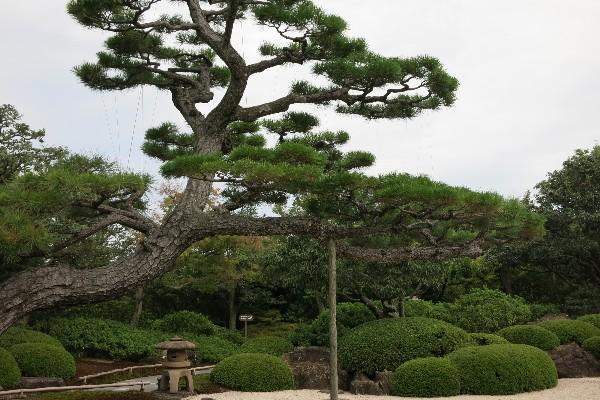 由志園 日本庭園  石庭