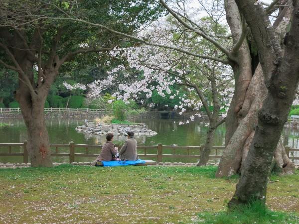 大村市玖島 日本のさくら名所100選 大村公園
