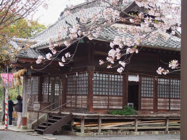 長崎県 桜の名所 大村公園