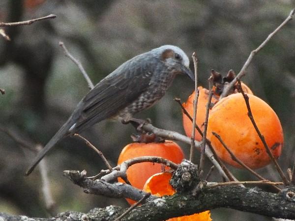 E-PM2で野鳥を撮る